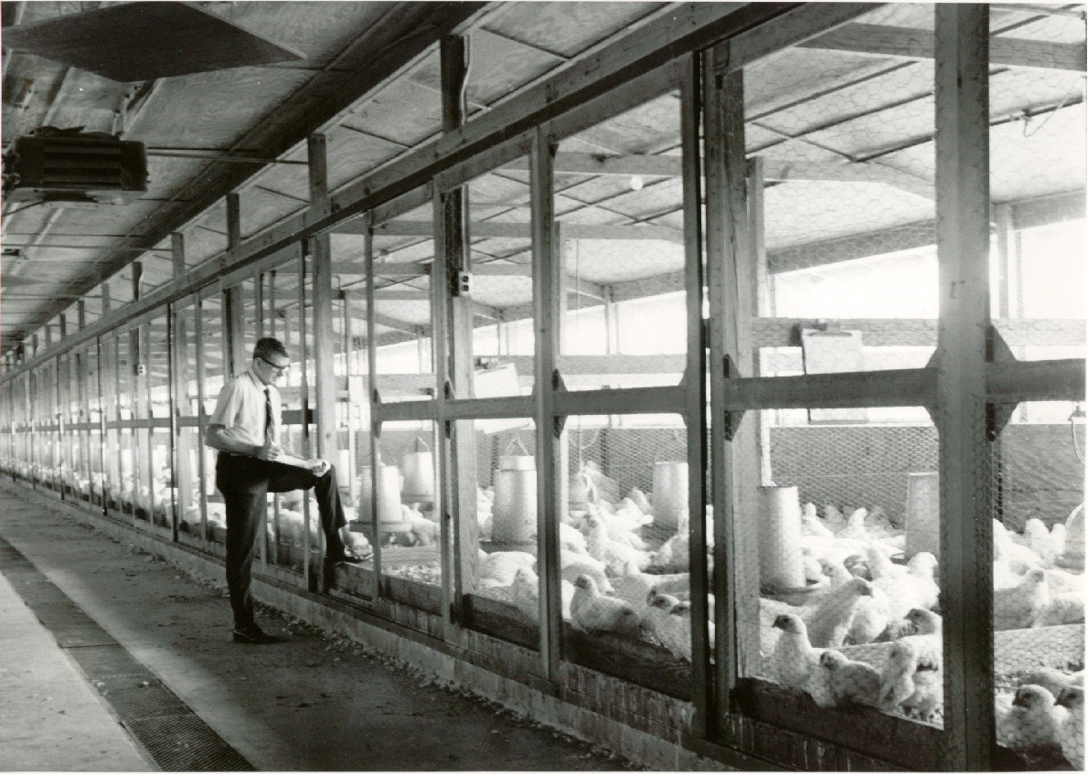 CRF broiler research 1958