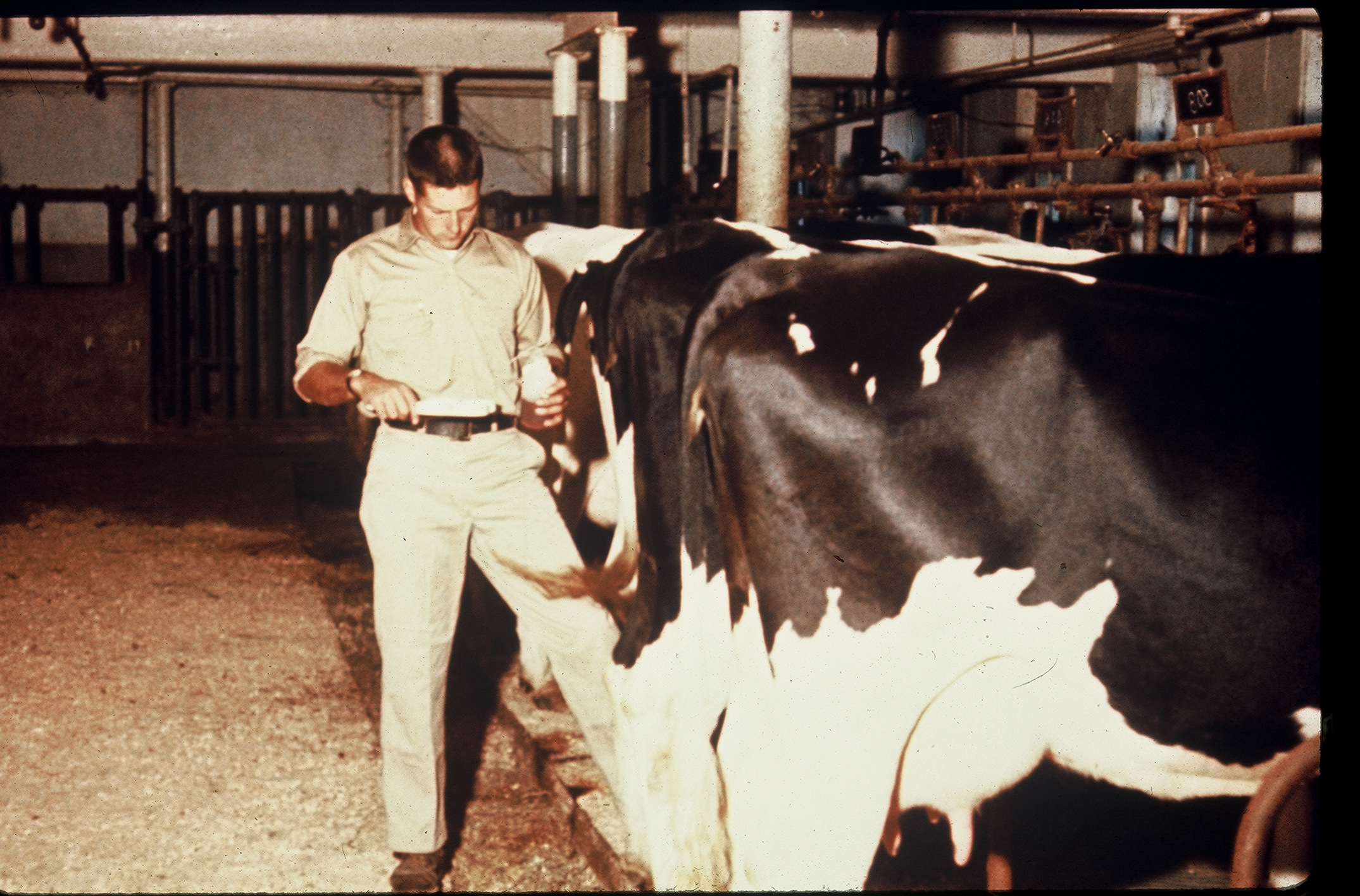 CRF Dairy Research Farm 1960's - Ellington, Connecticut