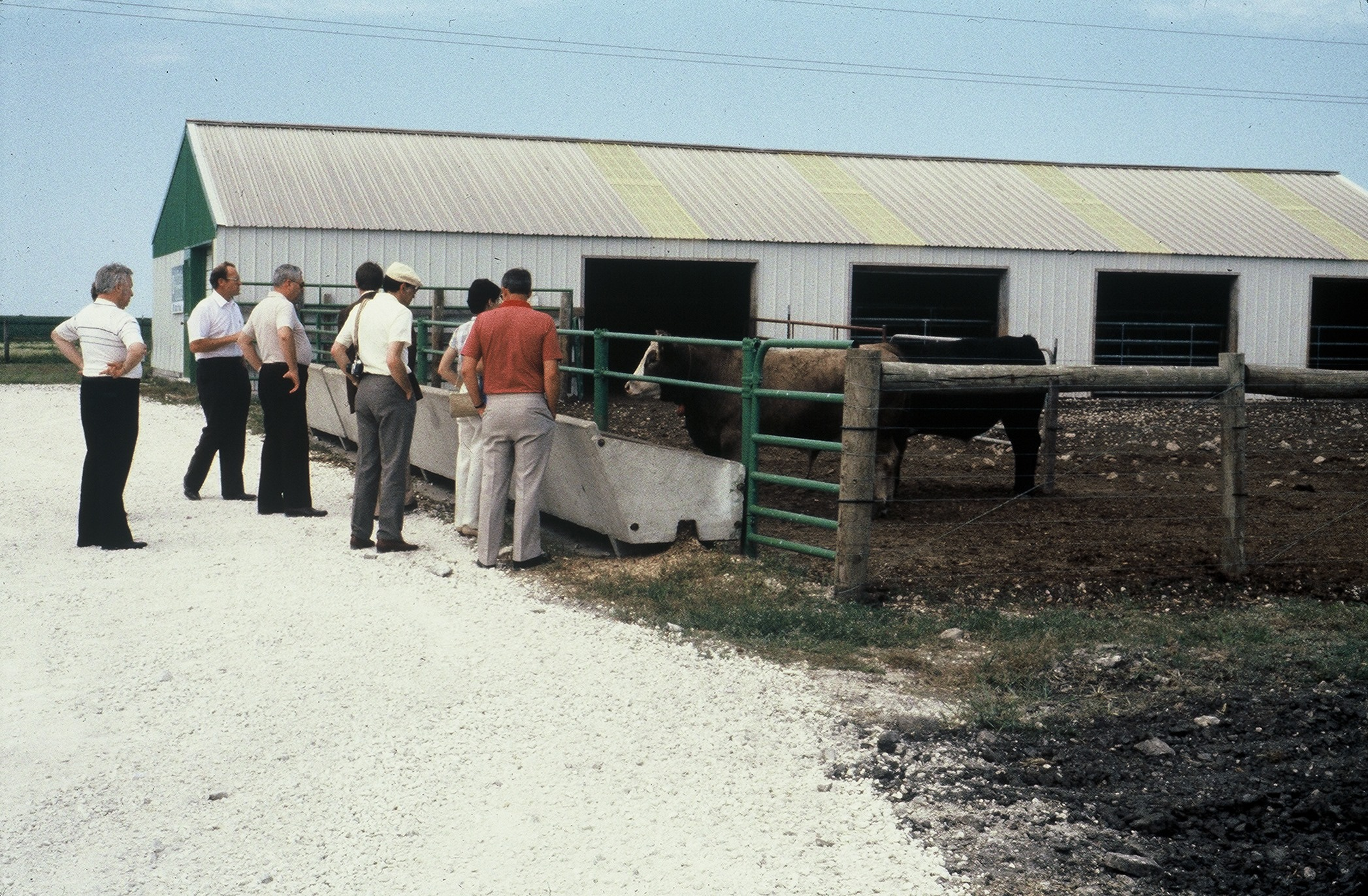CRF Growing Cattle Research - 1980's