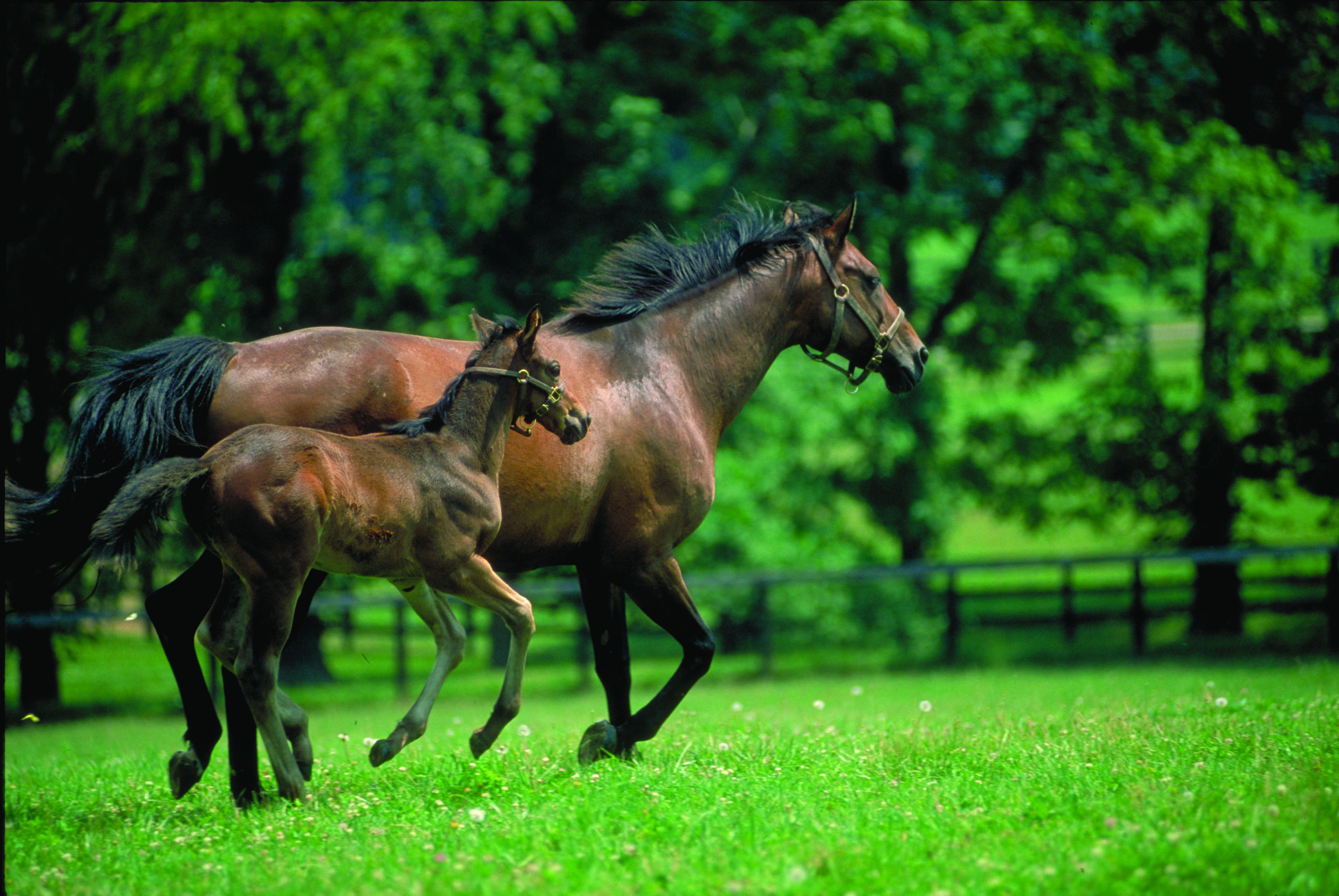 CRF Equine Nutrition Research